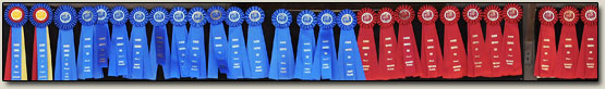 Mickey Hayden Horse Show Results